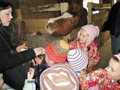 """Projekt """"rund ums Pferd"""""""